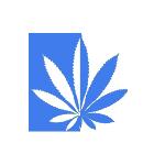 northeastern cannabis